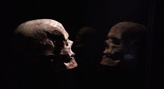 Cette image sert de bannière à l'article, il s'agit d'un crâne d'homme préhistorique.