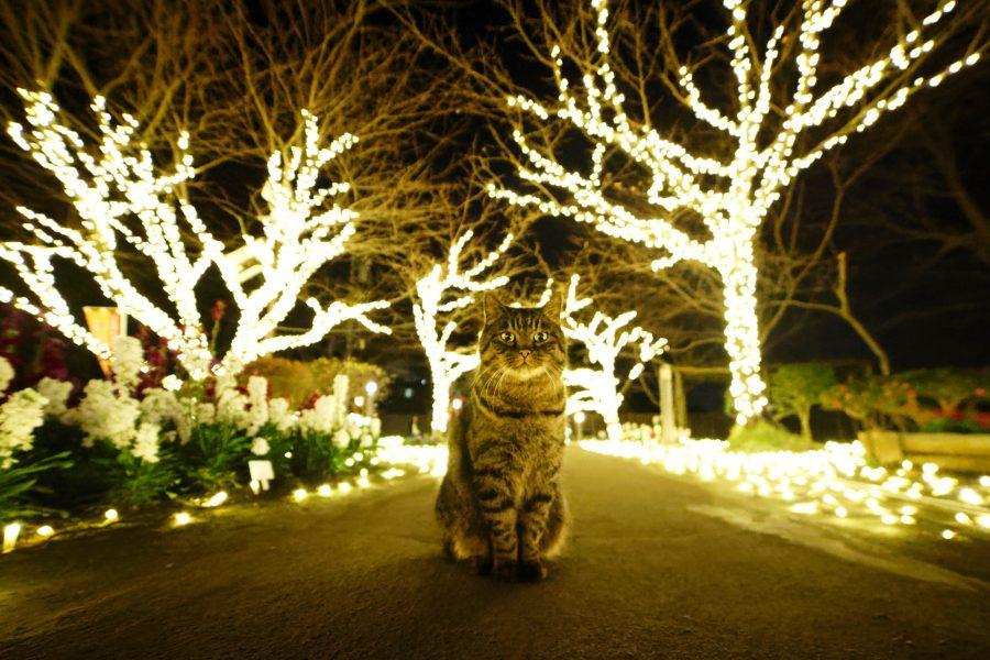 Nous voyons un chat au centre de la photo, il nous regarde. Autour de lui des arbres illuminés le mettent en avant.