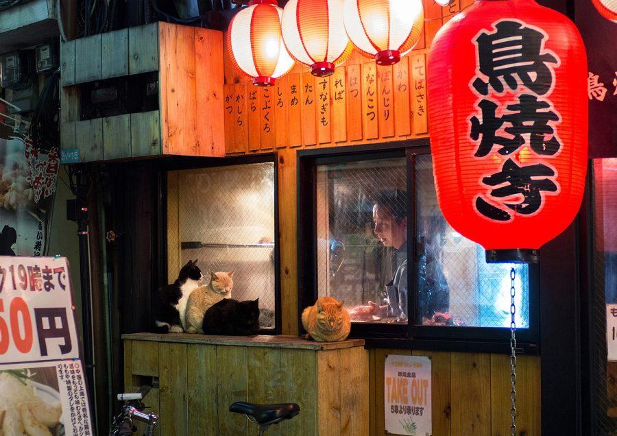 Un restaurant asiatique : on voit un cuisinier regarder des chats attendant de la nourriture.