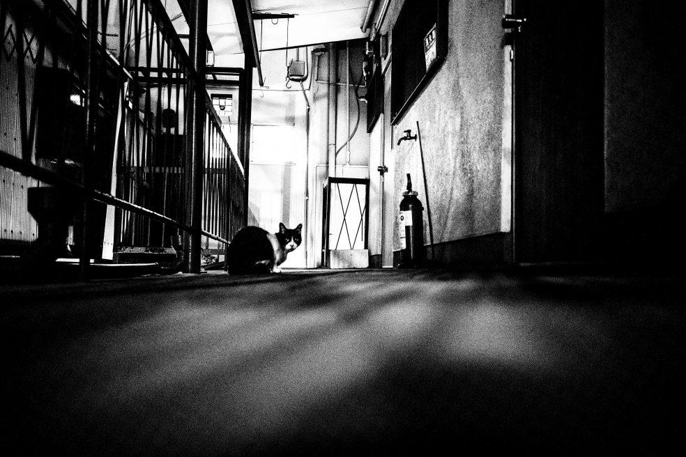 Une photo en noir et blanc. Le photographe a pris le chat en photo à même le sol.